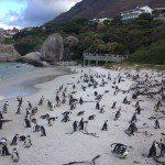 Penguins, Simons Town, Boulders Beach, Cape Town