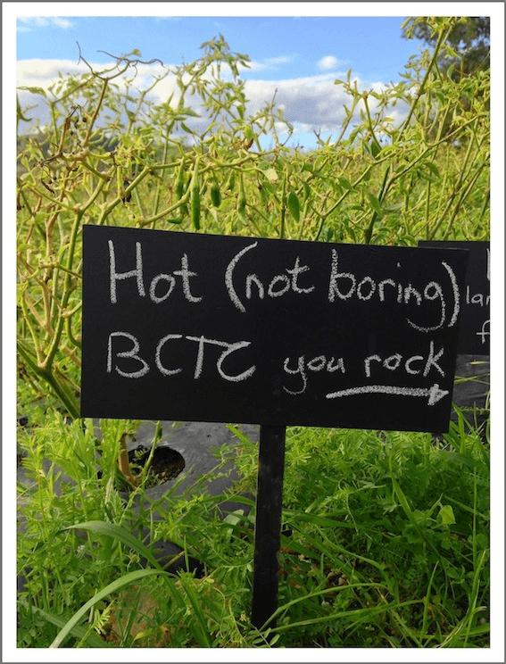 BCTC Chilli Vine