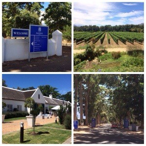 blue sign board against white wall on farm, rows of vines in vineyard, white farm house with path and lawn, tarred road between gum trees
