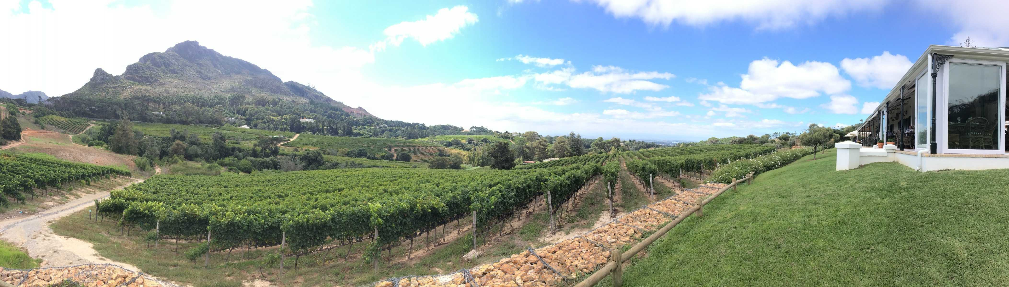 vineyards on hillside with mountain and blue skies with clouds