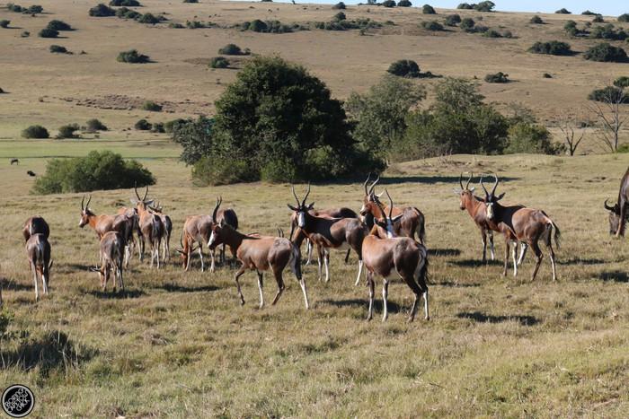 Kwantu Game Reserve - Morning Safari Drive - Boring Cape Town Chick 1