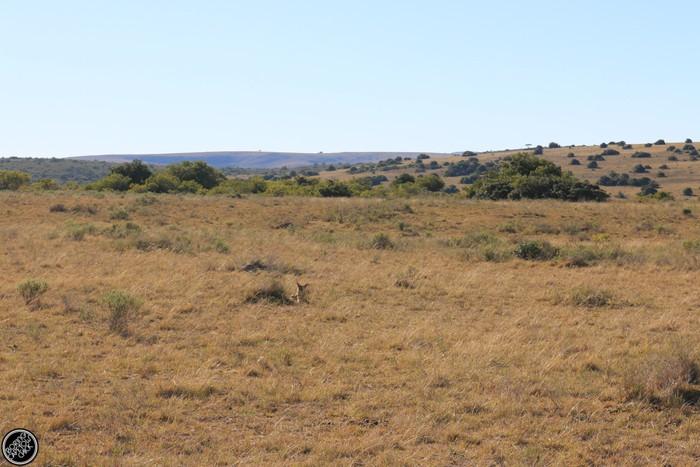 Kwantu Game Reserve - Morning Safari Drive - Boring Cape Town Chick 14