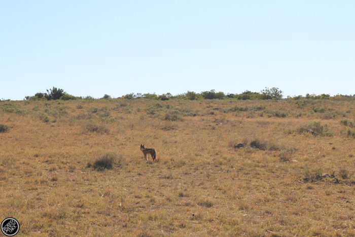 Kwantu Game Reserve - Morning Safari Drive - Boring Cape Town Chick 15