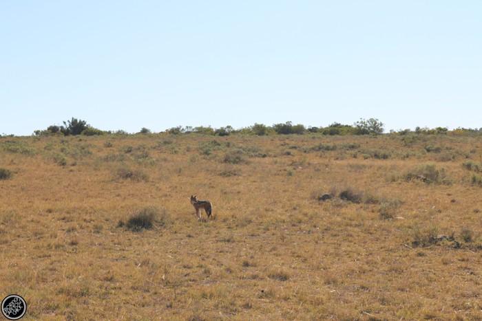 Kwantu Game Reserve - Morning Safari Drive - Boring Cape Town Chick 15