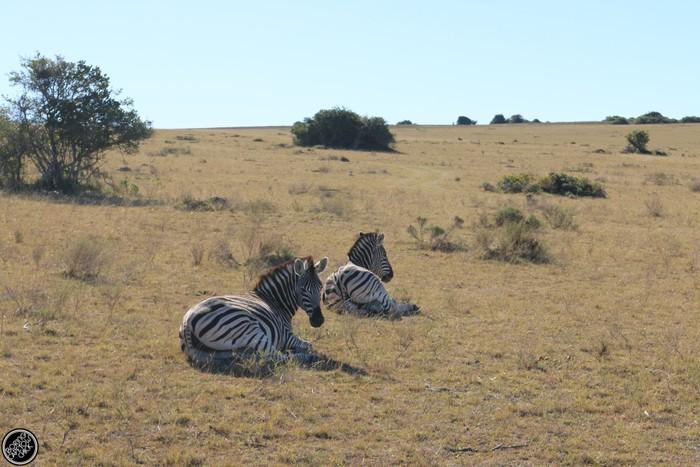 Kwantu Game Reserve - Morning Safari Drive - Boring Cape Town Chick 16