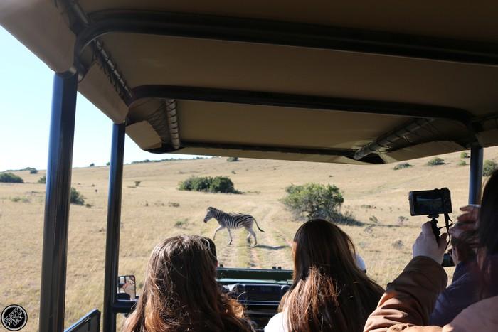 Kwantu Game Reserve - Morning Safari Drive - Boring Cape Town Chick 17