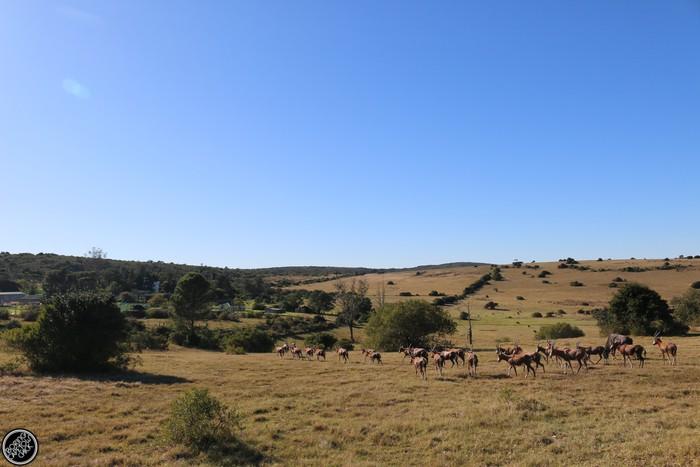 Kwantu Game Reserve - Morning Safari Drive - Boring Cape Town Chick 2