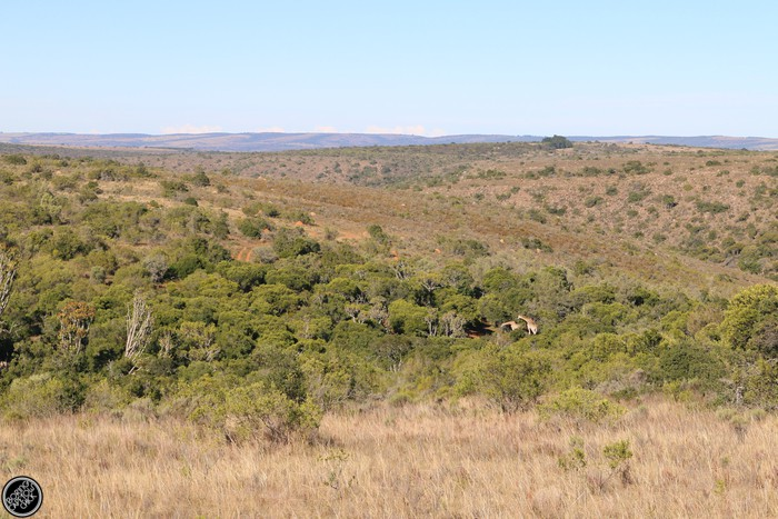 Kwantu Game Reserve - Morning Safari Drive - Boring Cape Town Chick 20