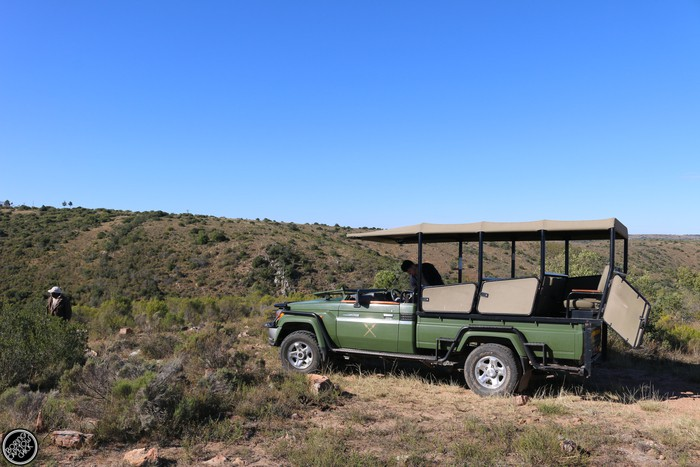 Kwantu Game Reserve - Morning Safari Drive - Boring Cape Town Chick 22