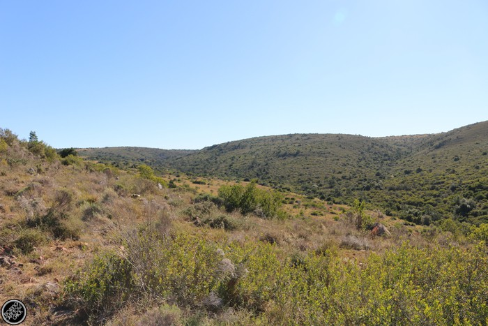 Kwantu Game Reserve - Morning Safari Drive - Boring Cape Town Chick 23
