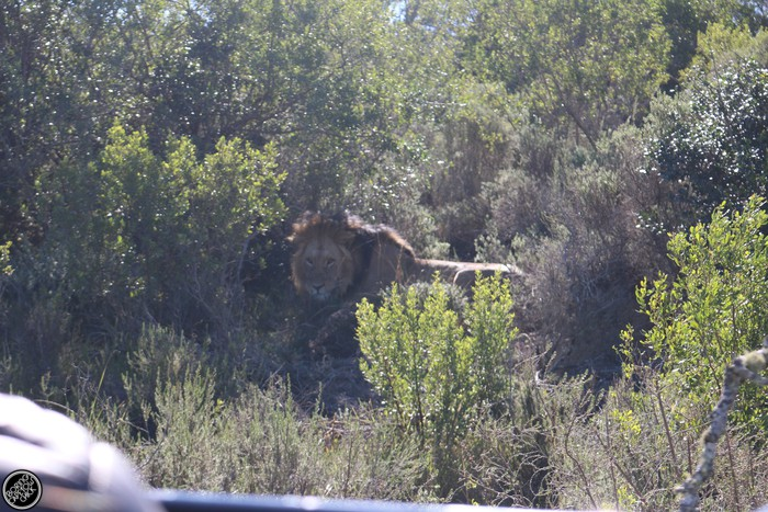 Kwantu Game Reserve - Morning Safari Drive - Boring Cape Town Chick 27
