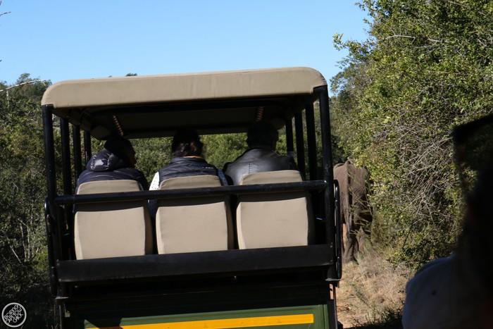 Kwantu Game Reserve - Morning Safari Drive - Boring Cape Town Chick 33