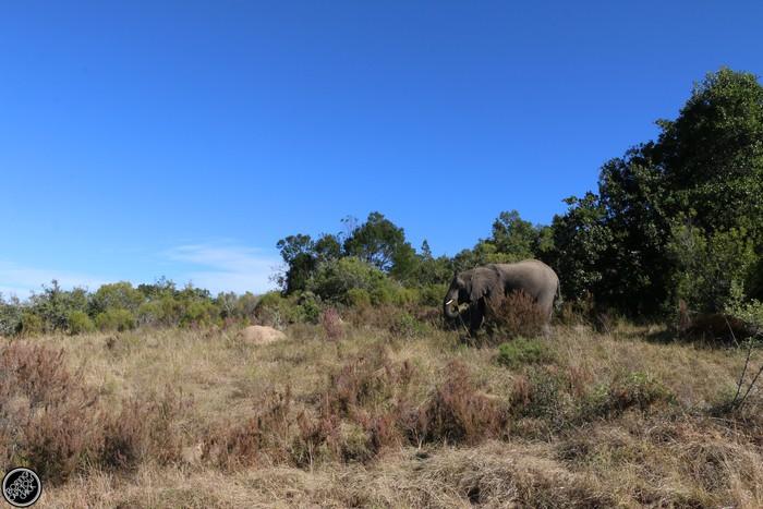 Kwantu Game Reserve - Morning Safari Drive - Boring Cape Town Chick 35