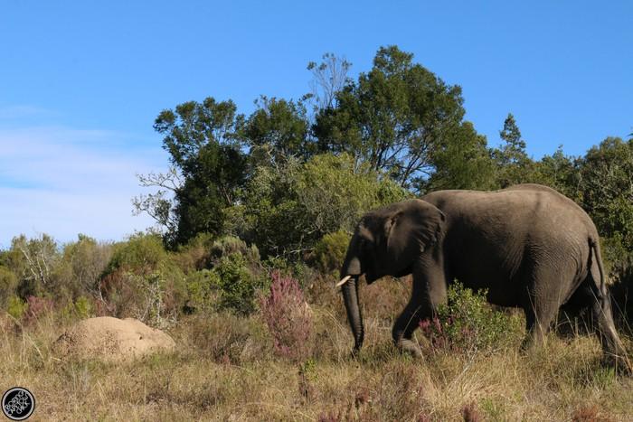 Kwantu Game Reserve - Morning Safari Drive - Boring Cape Town Chick 36