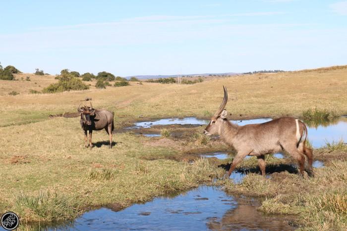 Kwantu Game Reserve - Morning Safari Drive - Boring Cape Town Chick 37