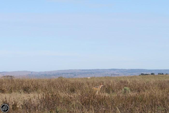 Kwantu Game Reserve - Morning Safari Drive - Boring Cape Town Chick 42