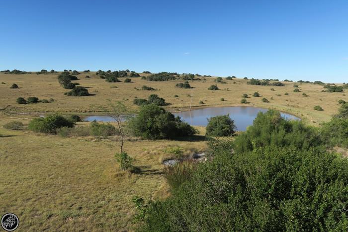 Kwantu Game Reserve - Morning Safari Drive - Boring Cape Town Chick 48