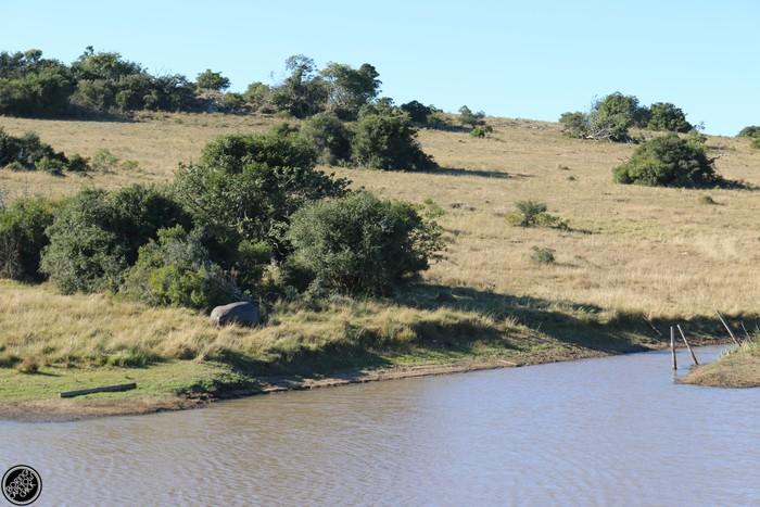 Kwantu Game Reserve - Morning Safari Drive - Boring Cape Town Chick 7